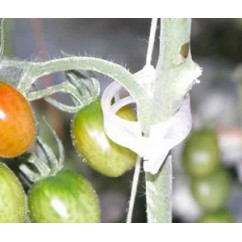 Clip de tomate